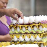 Descartan desabastecimiento de huevos