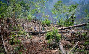 Bosques Honduras