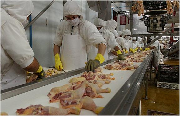 Esperan exportar pollo a Estados Unidos en el primer trimestre del año