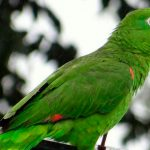 Instalan en Roatán nidos artificiales para la preservación de aves en peligro de extinción