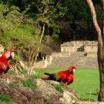 Parque Arqueológico de Copán Ruinas abrirá sus puertas nuevamente el 17 de diciembre