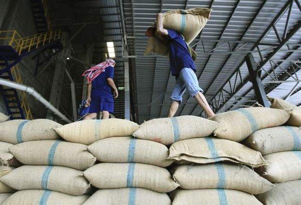 Productores de arroz analizarán si es viable importación para evitar desabastecimiento