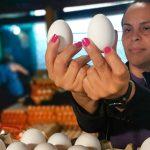 Avicultores garantizan abastecimiento continuo de huevos y carne de pollo