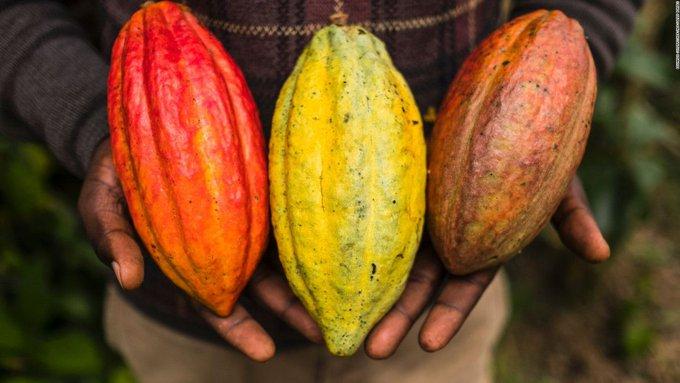 Suiza prefiere chocolate derivado del cacao hondureño durante cuarentena