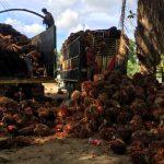 Honduras afina detalles para integrar Consejo Mundial de Palma Aceitera