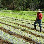 Honduras podrá ser un referente en la producción de alimentos en Centroamérica