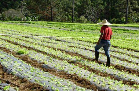 Proponen aprobar leyes en beneficio de la agricultura familiar en tiempos de COVID – 19