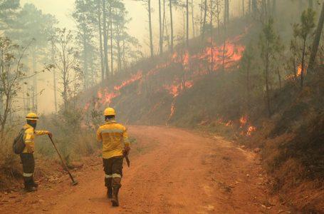 En alza incendios estructurales y forestales, alerta Cuerpo de Bomberos