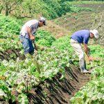 Producción de vegetales alcanza las 14 millones de libras en lo que va del 2020