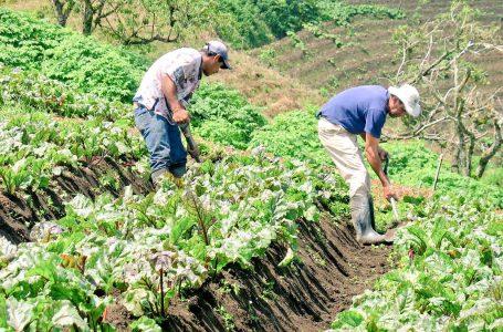 Sector agrícola necesita un nuevo banco si pretenden cerrar Banadesa