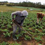 Productores agrícolas de Talanga reciben financiamiento por 10.5 millones de lempiras