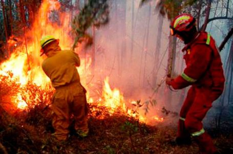 Al menos 16 incendios forestales se han reportado en lo que va del 2021