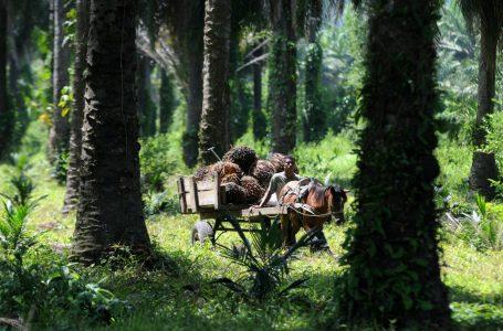 Gobierno y palmeros alcanzan acuerdo nacional para impulsar productividad y comercialización