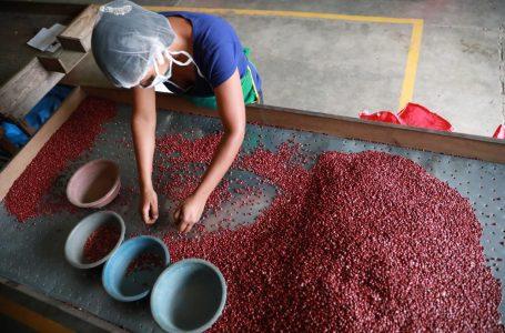 Garantizan abastecimiento de frijol con 79 mil quintales del grano en existencia