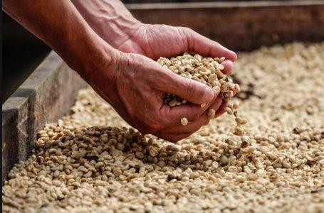Precio del café en mercado internacional incrementa cerca de 40 dólares
