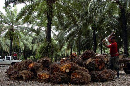 Con fidecomiso de L. 50 millones buscan restablecer zonas productivas de palma africana