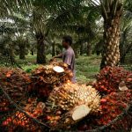 Recuperación en precio de tonelada de aceite mejora operatividad de productores