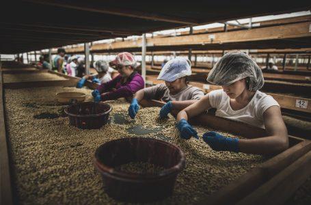 Exportaciones de café superan los $ 1,000 millones en divisas