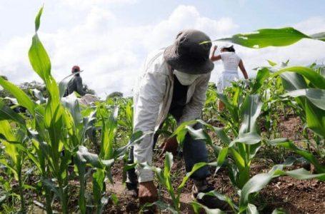 Un enorme reto la sostenibilidad del sector agroalimentario en el país