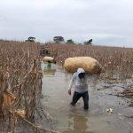 Fenagh pide a bancos ser flexibles con productores afectados por las tormentas