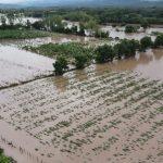 Pérdidas millonarias para cultivos de palma africana y banano tras paso de tormentas