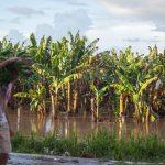 Honduras prevé una caída en exportaciones de banano tras afectaciones de huracanes