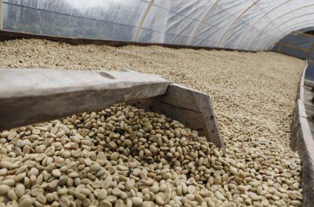 Divisas por exportaciones de café se han incrementado en un 19%