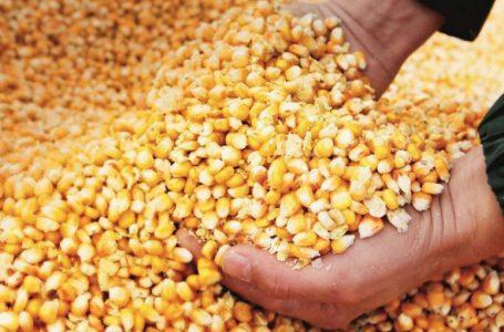 Reserva de la primera cosecha de maíz y frijoles asciende a más 180 mil quintales