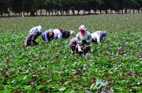 Honduras retoma programa de trabajos temporales en EE.UU.