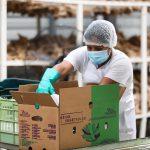 Exportaciones generan $. 480 millones en divisas pese a pandemia y tormentas