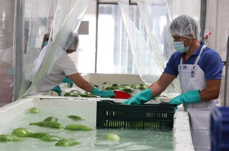 Agroindustriales temen millonarias pérdidas por temporada lluviosa