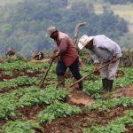 Unos 97 mil productores podrán acceder a créditos agrícolas