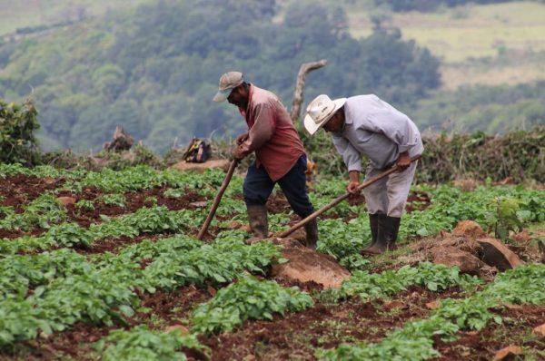 Unos 149 productores han recibido bono para impulsar cosechas