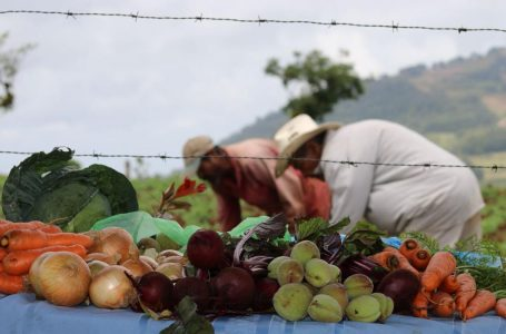 Se debe apostar por el agro para generar divisas y detener la importación de productos