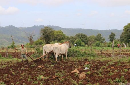 Unos 500 ganaderos serán beneficiados con sistemas de riego por goteo