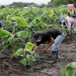 CN aprobó que tasa para préstamos del agro sea de 5% y el Estado pague diferencia