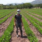 Olancho producirá semilla certificada de frijol para potenciales compradores