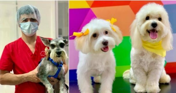 Hondureño decide emprender con una peluquería canina a domicilio