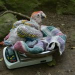 Macaw Mountain pide apoyo para continuar con la conservación de aves
