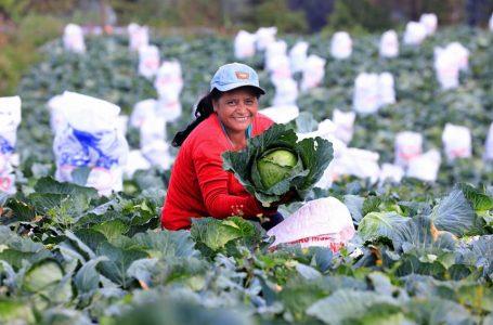 Honduras exportó más de L. 54 mil millones en productos agroindustriales y agrícolas en 2020