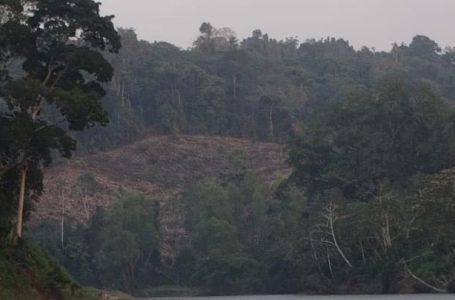 Devastación forestal en La Mosquitia desnuda negligencia de autoridades hondureñas
