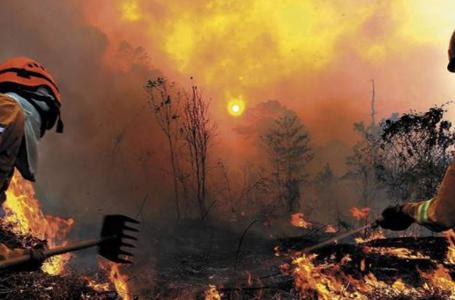 Incendios forestales han disminuido un 69% durante este 2021