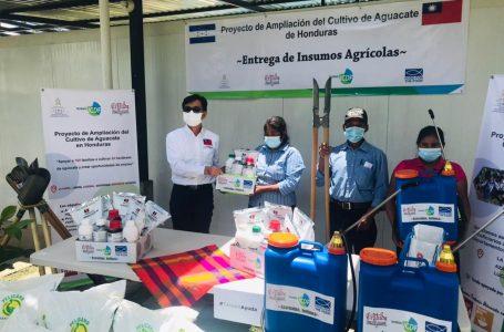 Taiwán fortalece a productores de aguacate de Intibucá