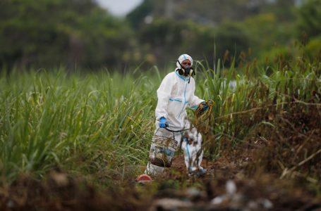 Exhuman 8 cadáveres en hogar de expolicía en El Salvador; estimaban 40