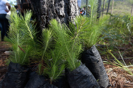 Autoridades proyectan reforestar un millón de hectáreas para el 2030