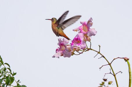 Charly HN, el fotógrafo amante de la ornitología