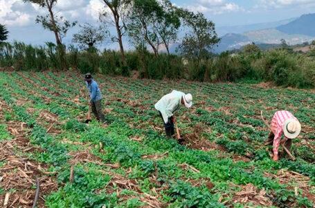 Productores a las espera de lluvias más constantes para no tener problemas de producción