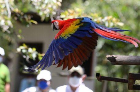 Todos están invitados al Guacamaya Fest en Copán Ruinas que inicia mañana