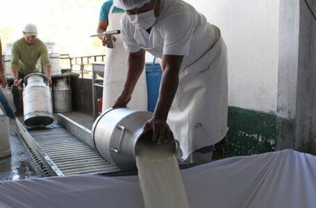 Productores denuncian que procesadoras no están cumpliendo con precio acordado de la leche