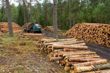 Exportación de madera continúa con promedio de 80 millones de dólares al año: ICF